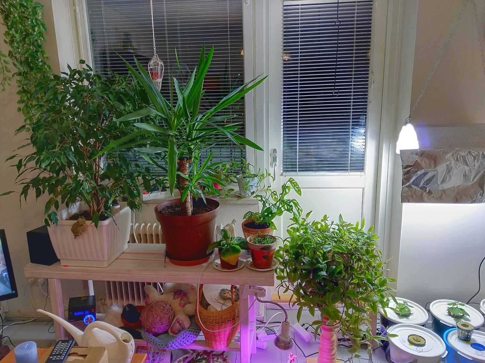 Lähes kaikki huonekasvit, kuva 2.1.2019